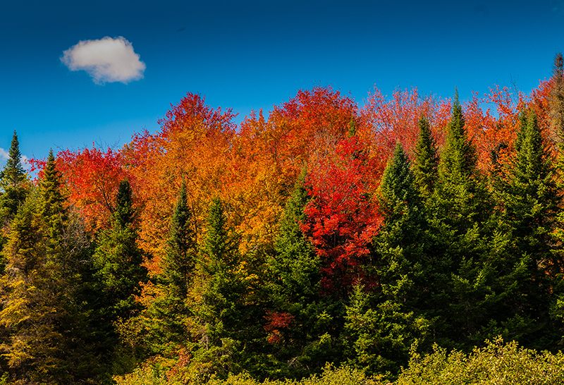Fall Foliage 9.26.2014 in Vermont