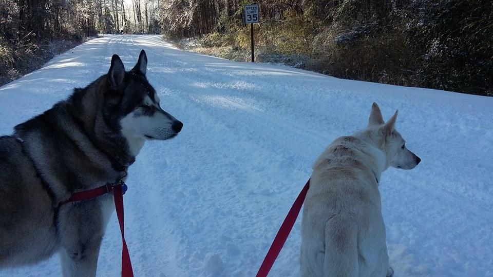 Kodiak and Chinook snow 2018 on walk.jpg