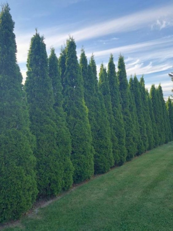Arbors.jpg