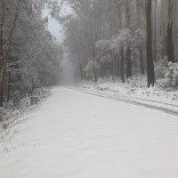 Snowy Hibbo