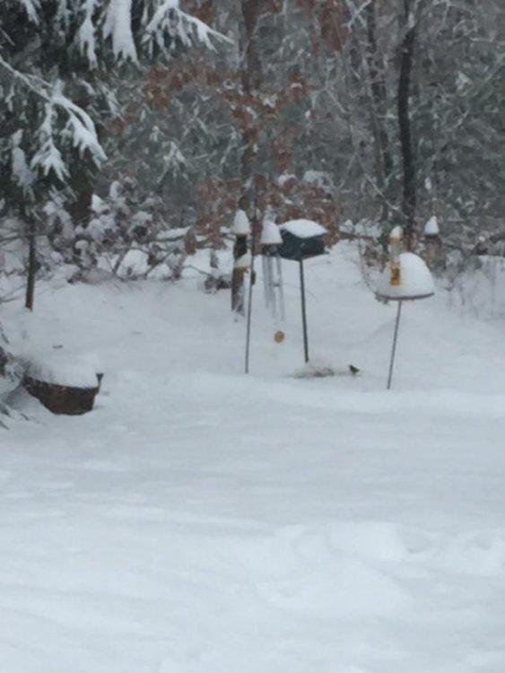 Dec2_snowpic1.jpg