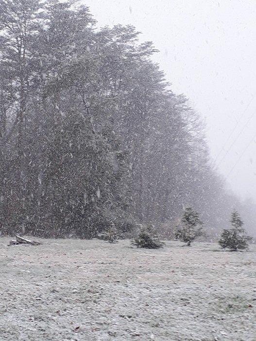 snow11.jpg.1e92e5eec0d2abd8f88cbc8845f3159c.jpg