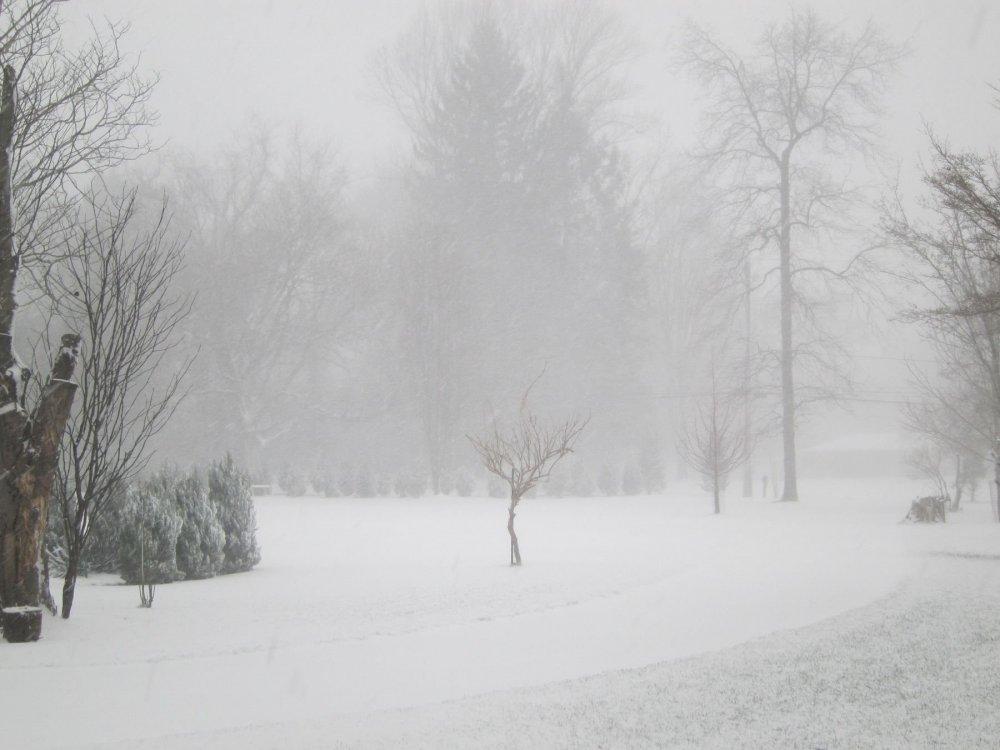 Snow-12-16-20a.thumb.JPG.fa5116bc7f6da7bf28527d4614e525d0.JPG