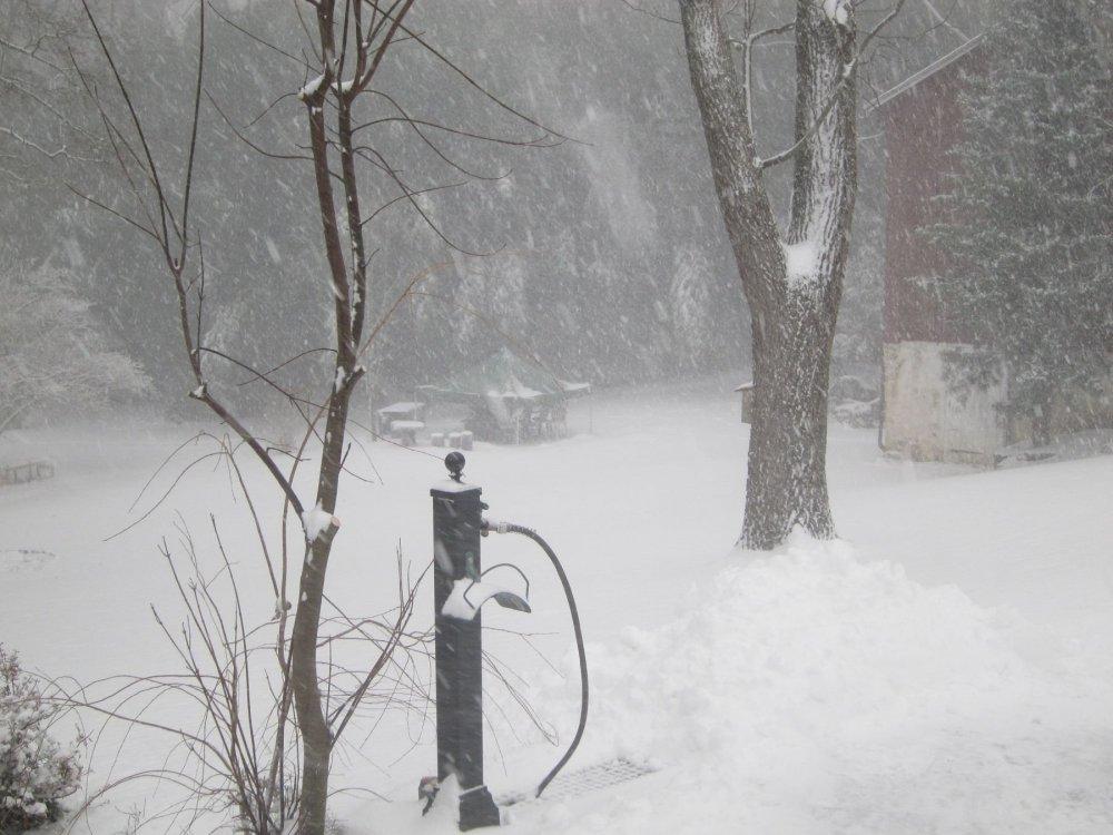Snow-12-16-20b.thumb.JPG.af3cc06519479754153804a76cf4360f.JPG