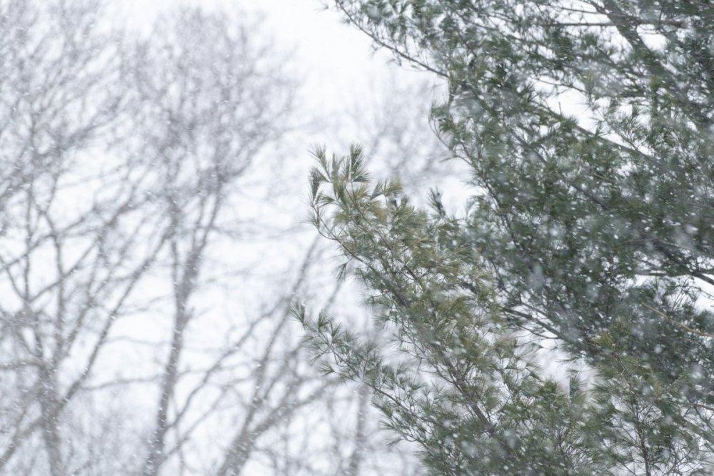 Snow-8258.jpg