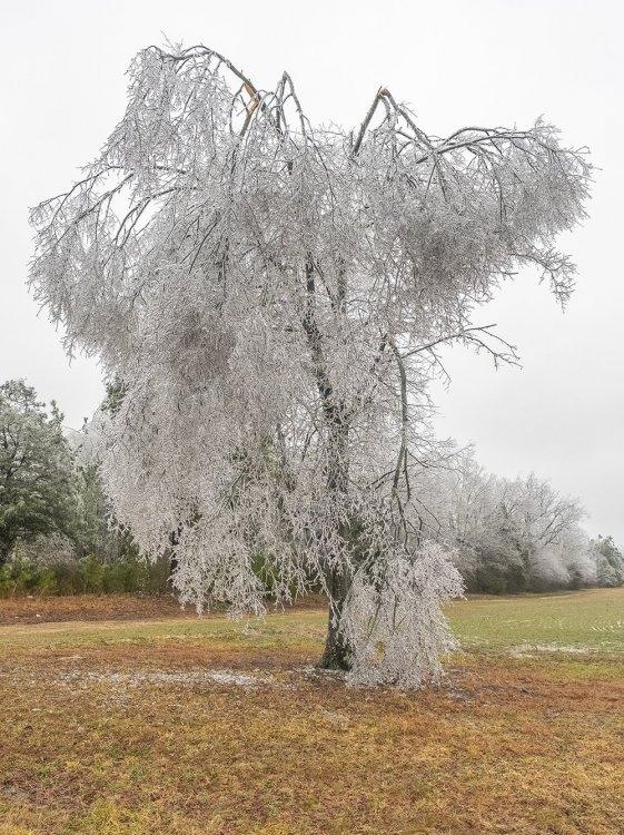 ice1web.jpg